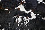 Натуральная коровья шкура экзотического натурального окраса, фото 4