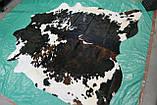 Натуральная коровья шкура экзотического натурального окраса, фото 5