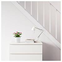 IKEA ФЕЙКА Искусственное растение в горшке, Маргаритка многолетняя разные цвета : 70234147, 702.341.47