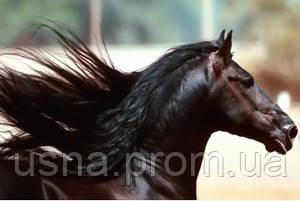 Шампунь для лошадей – натуральное и безопасное средство!