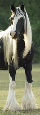 Шампунь для лошадей – соблазнение шикарными волосами!