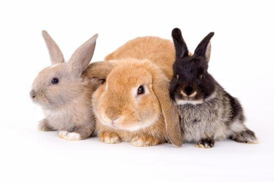 Ferplast KROLIK 140 PLUS Клетка для кроликов