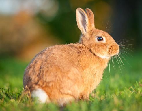 Ferplast RANCH 100 Вольер для кролика