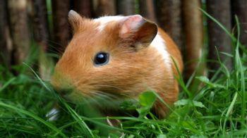 Ferplast MAXI DUNA MULTY Клетка для кроликов и морских свинок