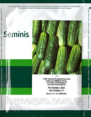 Семена огурца Потомак F1 \ Potomac F1 1000 семян Seminis