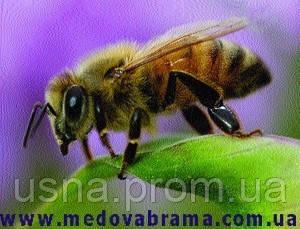 Продаю препараты для лечения пчел. Лекарства для пчел ЗАО «Агробиопром», Россия