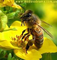 Продаю высокоэффективные ветеринарные препараты для лечения болезней  пчел.