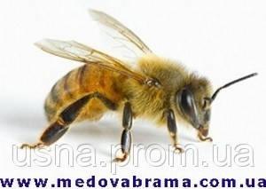 Продаю ветпрепараты для лечения пчел
