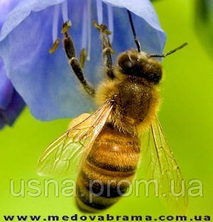 Консультации по болезням пчел.