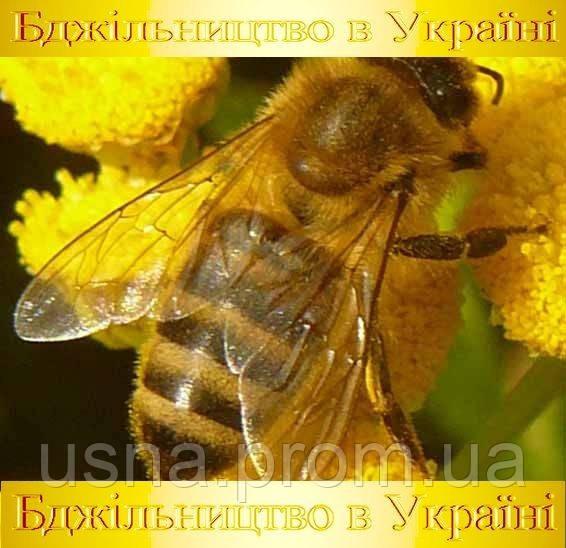 МЕДОВАЯ БРАМА — это современная информация о пчеловодстве в Украине.