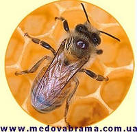 Продам препарати для лікування бджіл