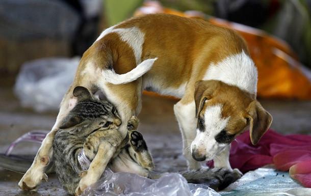 Социологи: На Западной Украине больше любят собак, а на Восточной - кошек