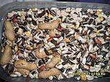 Корм для крупных попугаев + арахис (DELI NATURE-BEYERS BELGIUM) № 60, фото 3