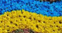 З днем незалежності Україні!