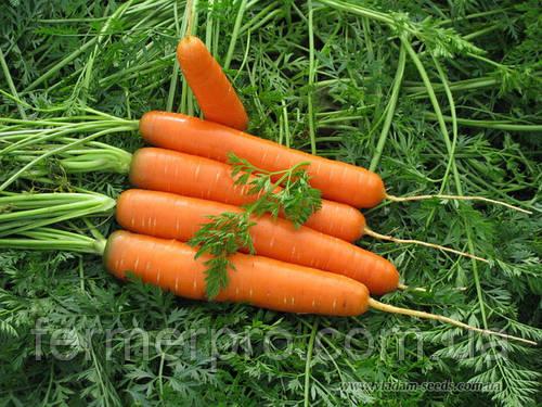 Морковь Роял Форто Seminis 100 грамм