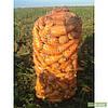 Морковь Роял Шансон 100 грамм Seminis