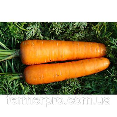 Семена моркови Борец  Clause 25000 семян