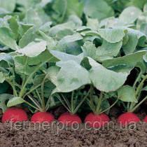 Семена редиса Хелро (Helro ) Rijk Zwaan 250 грамм