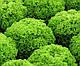 Семена салата Локарно \ Lokarno RZ 1000 семян тип Лолла Бионда Rijk Zwaan, фото 4