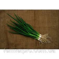 Семена лука на перо японский 0,5 кг семян  Hortus
