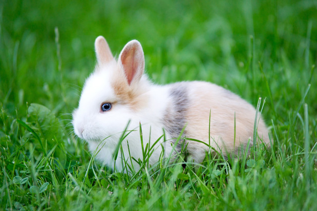 Ferplast RANCH 160 Вольер для кролика