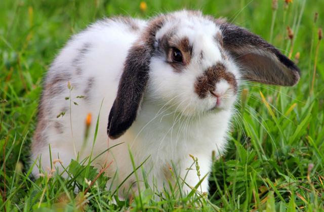 Ferplast KROLIK LARGE Клетка для кроликов