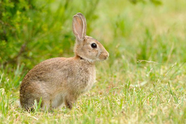 Ferplast CAVIE 100 DELUXE Клетка для кроликов и грызунов