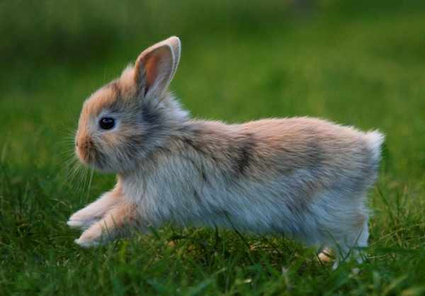 Ferplast GRAND LODGE 160 Вольер для кролика