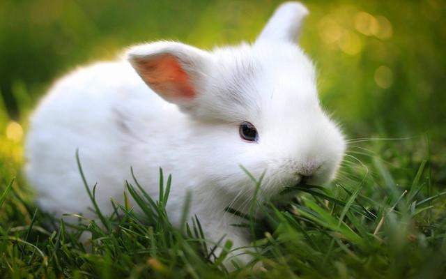 Ferplast RABBIT 160 Клетка для кроликов