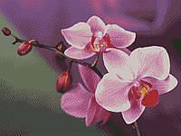 """Схема для вышивки бисером """"Орхидеи """""""