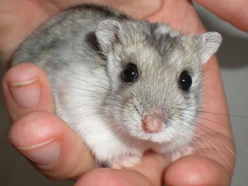 Ferplast CRICETI 100 Клетка для хомяков, мышей