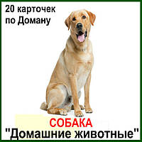 """20 карточек по Доману """"Домашние животные."""""""