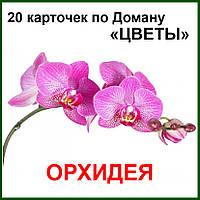 """Карточки по Доману """"Цветы"""""""