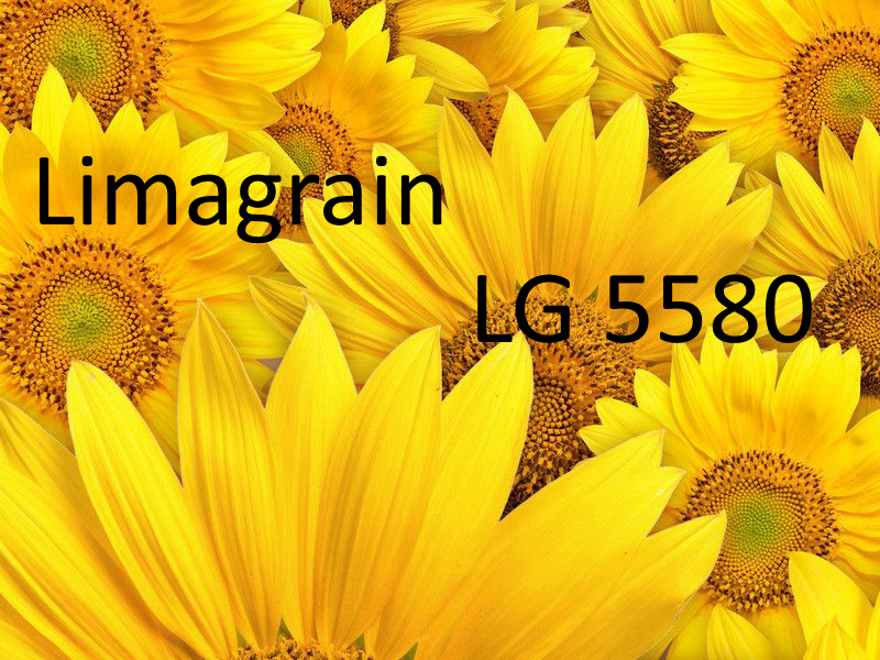 Семена подсолнуха Лимагрейн ЛГ 5580 (Новая Тунка)