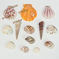Пляж природный аквариум украшения аквариума ракушек корабля аксессуары