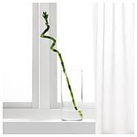 IKEA DRACAENA Растение, Драцена Сандера, спираль : 50064589, 500.645.89