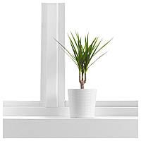 IKEA DRACAENA МARGINATA Растение в горшке, Драцена окаймленная, 1 стебель : 80177170, 801.771.70