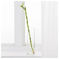IKEA DRACAENA Растение, Драцена Сандера : 60065461, 600.654.61