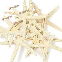 10шт белая морская звезда звезда морские раковины пляж DIY украшения ремесло