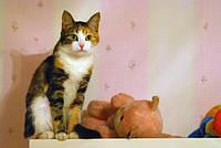 Дом без кошки – дом без счастья