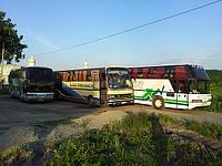 Транспортные услуги      Пассажирские автобусные перевозки