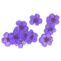 Сухоцвет цветочки фиолетовые (в зипе)