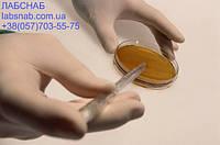 Питательная среда для выделения грибов рода Candida
