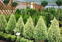 Уличные растения под заказ