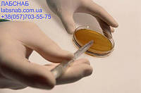 Эритрит агар (для выделения и культивирования бруцел)