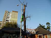 Удаление деревьев сухих