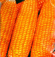 Семена кукурузы Лакомка, 100г