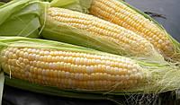 Семена кукурузы Сахарная, 100г