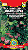 Актинидия Коломикта * 10 шт
