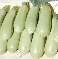 Семена кабачка  Белоплодный  (весовые)